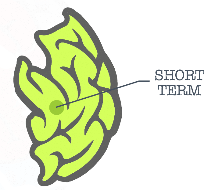 Managed Futures Brain Short Term