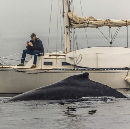 Whale CTA Guest Post Election Year