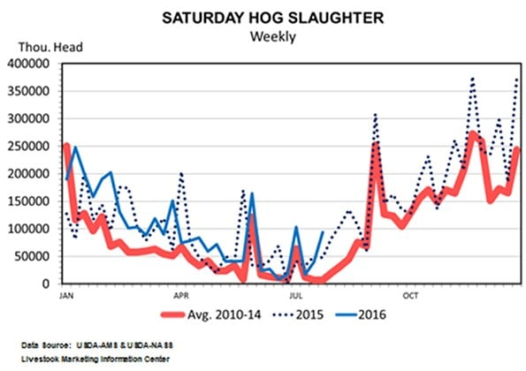 saturday-hog-slaughter