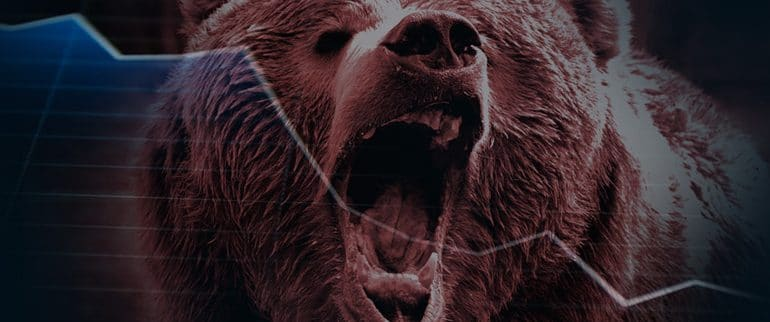 bear_banner